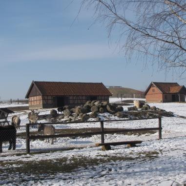 farma zwierząt