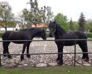 konie Galiny