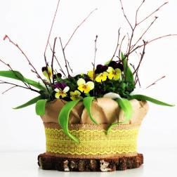 wiosna na parapecie, czylibratki w doniczce